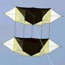 Navy Dove